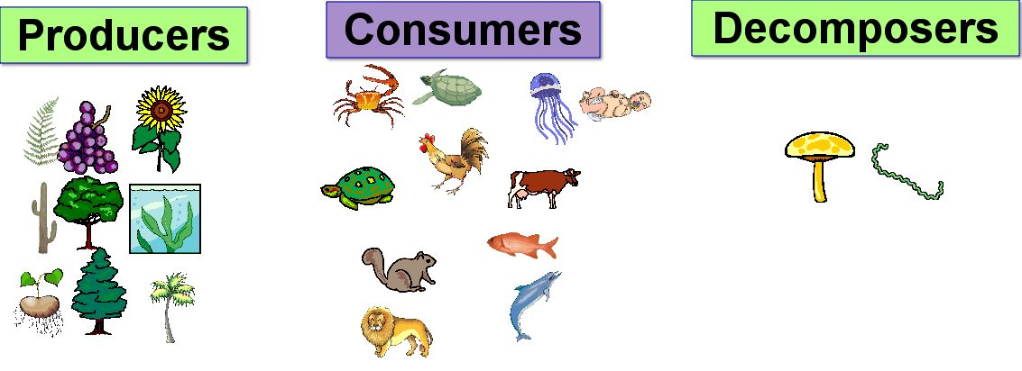 food chain pictures of animals. ecosystem, food chain,