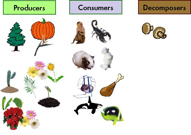 Producers+consumers+and+decomposers+lesson